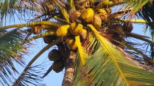 Kokosöl. Der Geruch erinnert unweigerlich an Sonne, Strand und Meer - FemNews.de